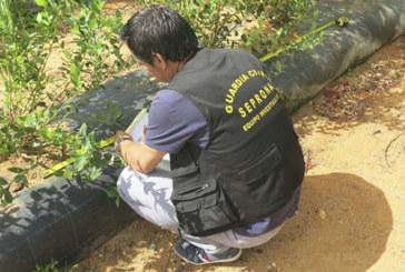 La Redondela | La Guardia Civil localiza a los presuntos responsables de la intoxicación producida a parte de la población de la localidad