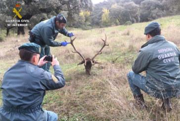 Aracena | La Guardia Civil relaciona a una persona con un delito de caza furtiva