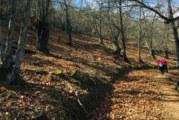 60 cartayeros participan en la cuarta ruta del programa municipal de senderismo, en Higuera de la Sierra