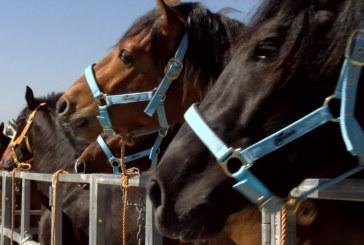 Reportaje   Zona de trato de la Feria del Caballo de Cartaya 2019