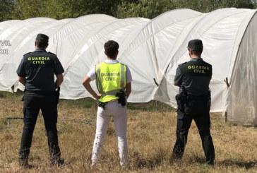 Almonte | La Guardia Civil detiene a tres varones por cultivar de marihuana en una finca privada de la localidad