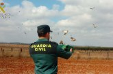 San Bartolomé de la Torre | La Guardia Civil interviene un total de 38 aves fringílidas que habían sido capturadas ilegalmente