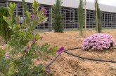 Cartaya Tv | «Jardín Violeta» en memoria de las mujeres víctimas de la violencia de género