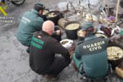 La Guardia Civil junto con Inspección Pesquera realiza varios operativos contra el marisqueo ilegal