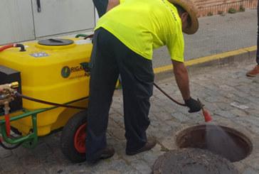 El Ayuntamiento inicia la tercera fase de la campaña contra las cucarachas de la red de alcantarillado