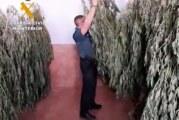 Paterna del Campo  | La Guardia Civil interviene 22 plantas de marihuana en la localidad