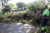 El Ayuntamiento de Cartaya restituye la normalidad en los tres núcleos tras los graves daños del temporal en la localidad