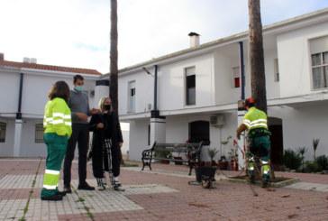 El Ayuntamiento realiza la poda de las palmeras y arbolado en Cartaya, El Rompido y Nuevo Portil