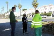 El Ayuntamiento acomete la poda de las palmeras y arbolado en Nuevo Portil
