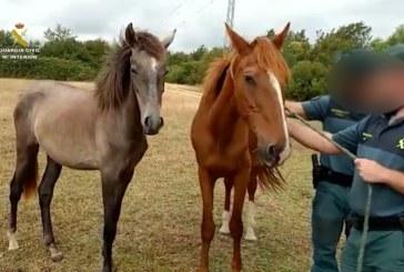 Almonte | La Guardia Civil localiza varios equinos en estado de desnutrición severa en la localidad