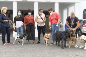 Cartaya Tv | Proyecto de terapia asistida con animales para víctimas de violencia de género
