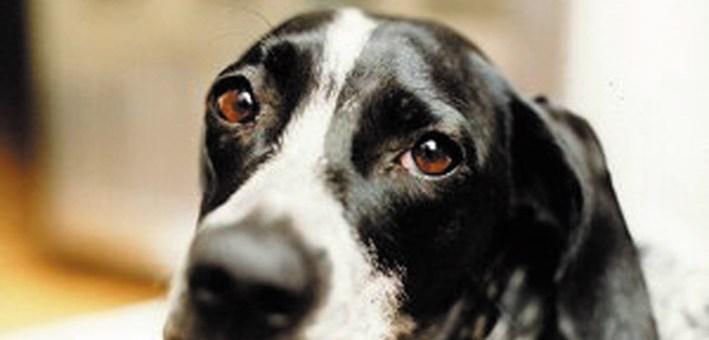 Frosinone I Cani Randagi Avranno Una Casa La Giunta Approva L