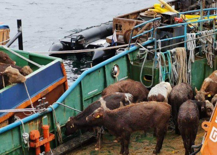 Aysén: Continúan maniobras para reflotar nave accidentada