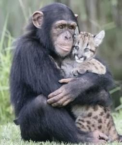 macaco e amigo