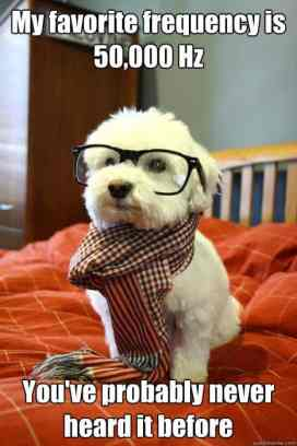 Hipster dog favourite frequency