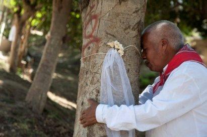 barbat-copac-casatorie