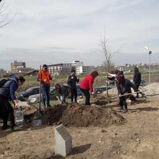 plantare parc ovidius radio constanta 13