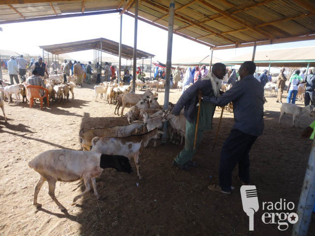 Somaliland livestock trade boosted by new export market in Oman
