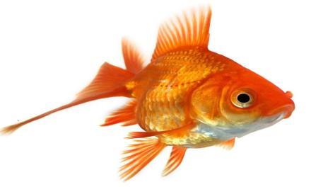 La puzza di pesce rende più sospettosi.