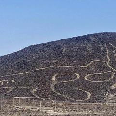 """La scoperta archeologica in Perù. Il mistero del """"gatto nel deserto"""" «Può risalire al 200 avanti Cristo»"""