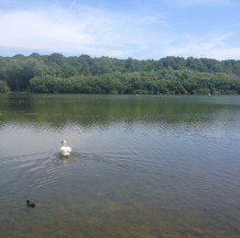 DAY 53 - Sun 23rd Aug - Ruislip Lido by @Lady_greenwood