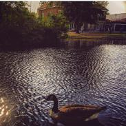 DAY 12 - July 12th - Pinner Park by @Shootingstar262