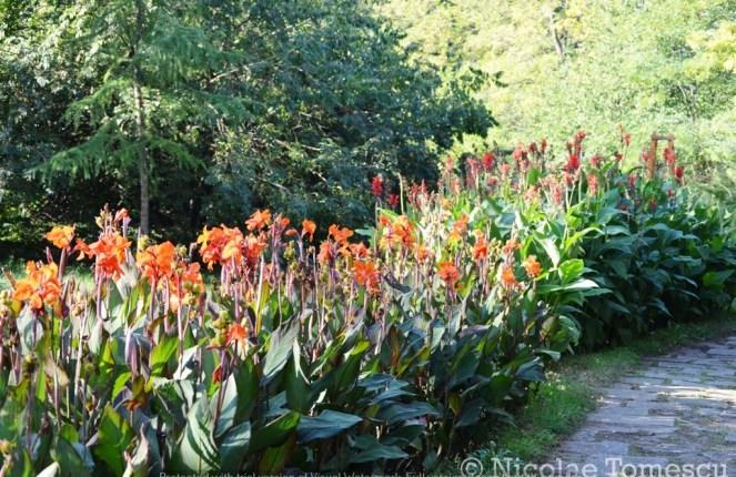 3500 Iasi Botanical Garden Autmn Flowers