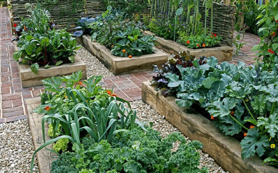 The Best Way to Plan Your Vegetable Garden