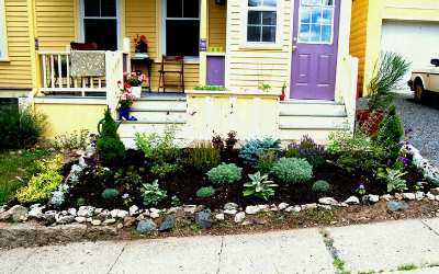 Create a water wise pavement garden