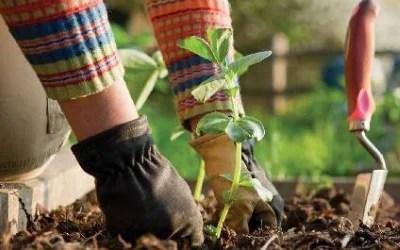 Gardening with Annisa Essack – Sun 31.05.2020