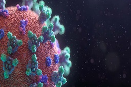 Experts say people who have suffered with the Coronavirus have 83% immunity for at least five months