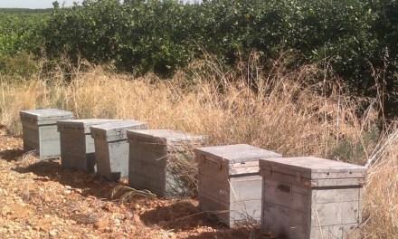 Robaron más de 100 colmenas de un campo de Monje