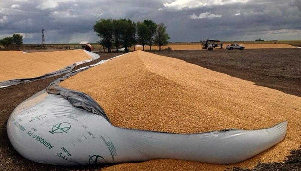 """Rompieron un silo bolsa y a """"baldazos"""" se robaron 23 mil kilos de soja"""