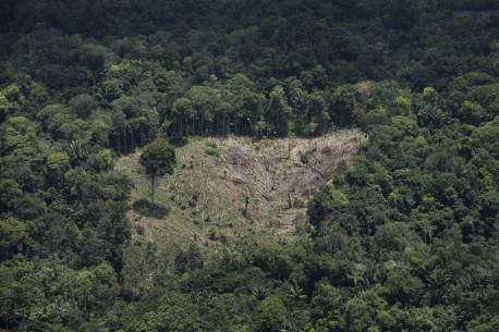 En Colombia más de un millón de personas viven del bosque nativo - DeforestacionenTumaco_Cortesia-Semana_
