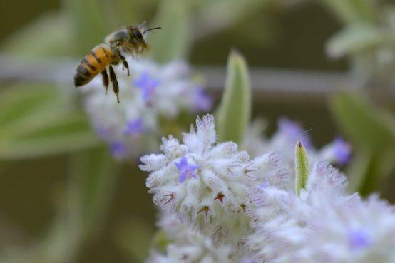 Jaque a los pesticidas que acaban con las abejas - abejas-dia-1200x800-300x200