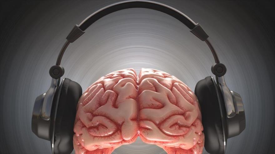 El cerebro desactiva las respuestas a sonidos que le molesta - cerebro