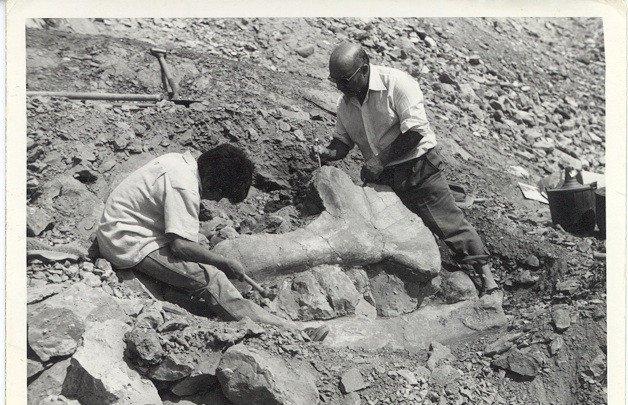 El renacer de los dinosaurios zombis - Yacimiento_image671_405