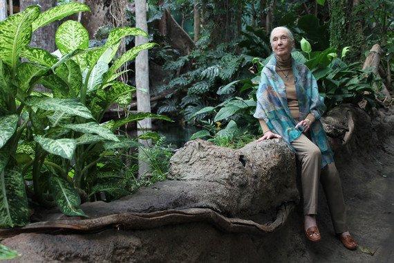 """Jane Goodall: """"Estamos viviendo la sexta extinción masiva de especies, causada por nosotros"""" - Jane-Goodall-Estamos-viviendo-la-sexta-extincion-masiva-de-especies-causada-por-nosotros_image_380"""