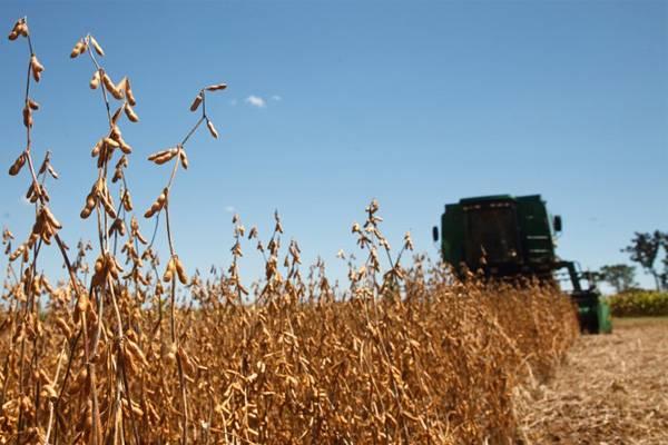 Presidente da Fecoagro destaca boa perspectiva de custo/benefício nas próximas safras de milho e soja
