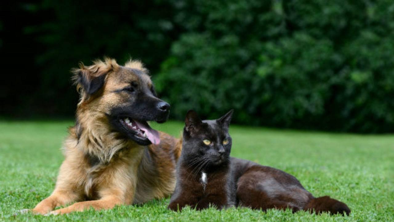 Bossoroca publica lei que orienta proprietários a registrar seus cães e gatos