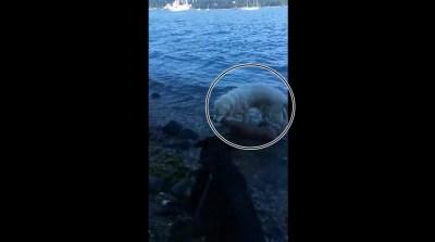 Perro salva siervo que se ahogaba