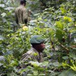 Beni: les écogardes arrachent six otages des mains des rebelles dans le Virunga