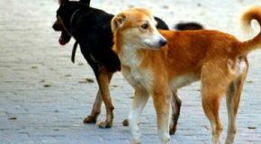 14 cani avvelenati a Sassano