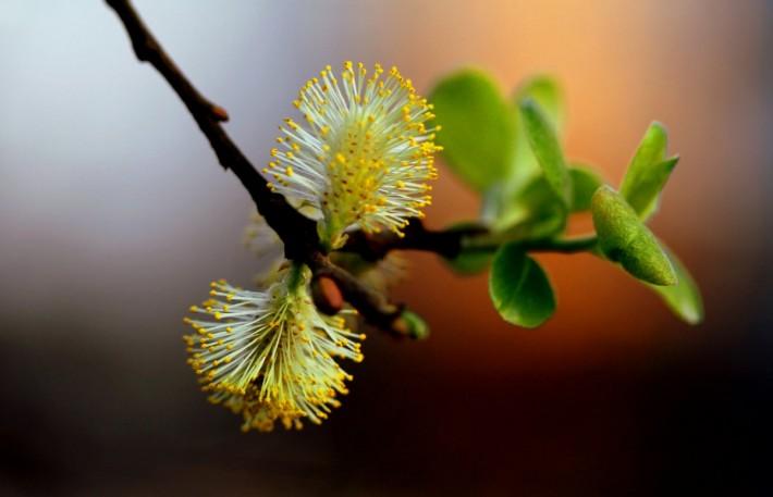 Ассорти из красивых фоток: Весна! (30 фотографий)