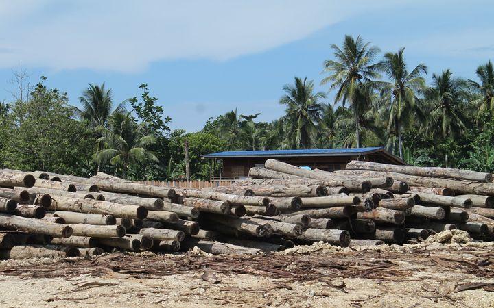 Deforestation is rife across New Guinea.