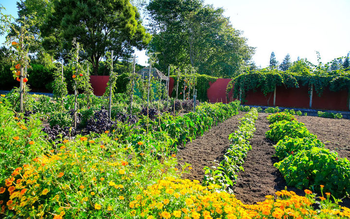 Labour Day weekend gardening with Xanthe White | RNZ on Gardening  id=62854