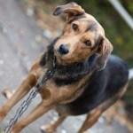 Ciudad: Quienes maltraten o abandonen a una mascota, pagarán una multa de hasta $42.800 y trabajarán hasta 5 días ad honorem