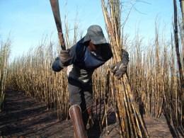Governo dificulta acesso à lista suja do trabalho escravo