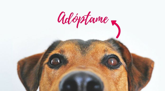 perros-adopcion-hermosillo