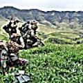 The Marines train in Makua Valley.